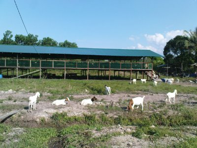 dairy goat farm business plan