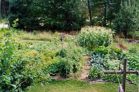 organic_garden