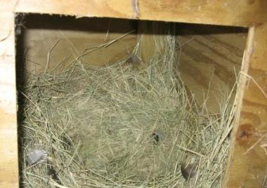 woodennestbox